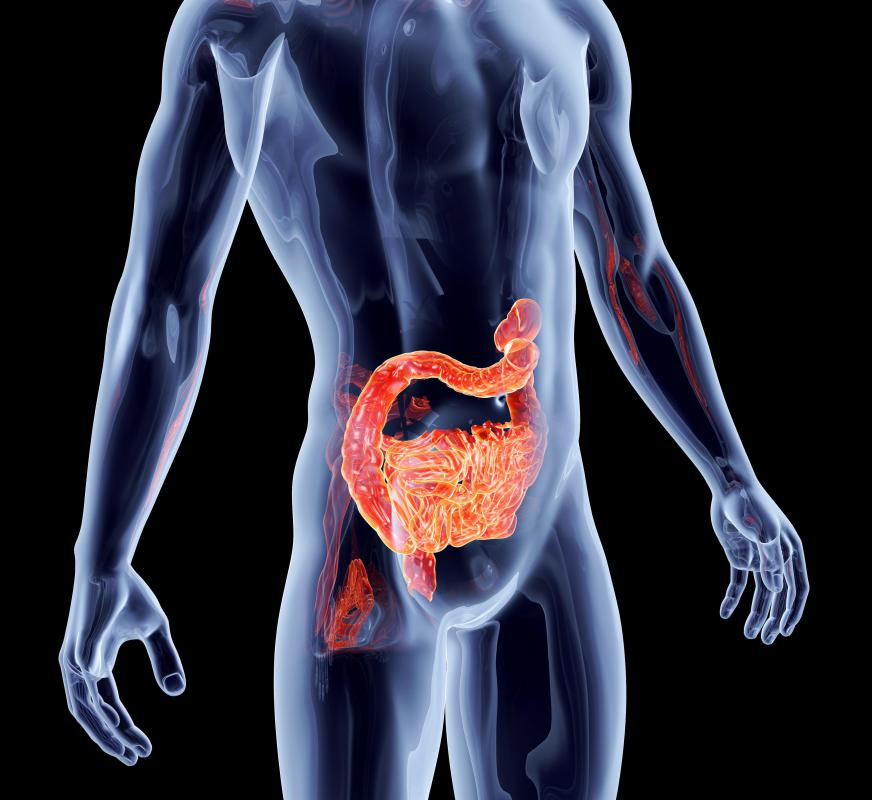 Probiotics can help maintain healthy amounts of beneficial bacteria in the intestinal tract.