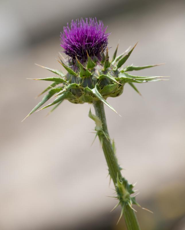 Certain herbs like milk thistle can be used to treat cirrhosis.