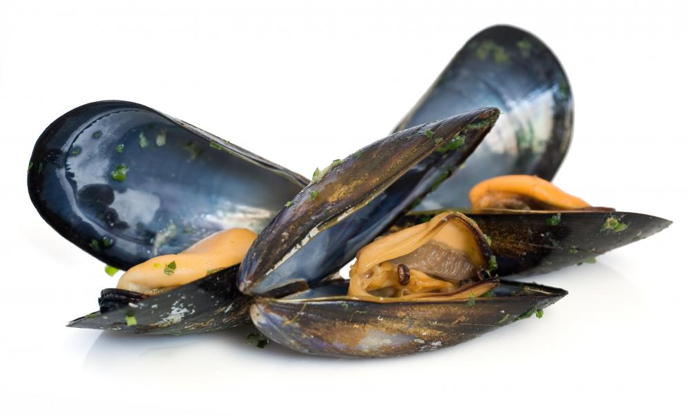 Mussels often cause gout.